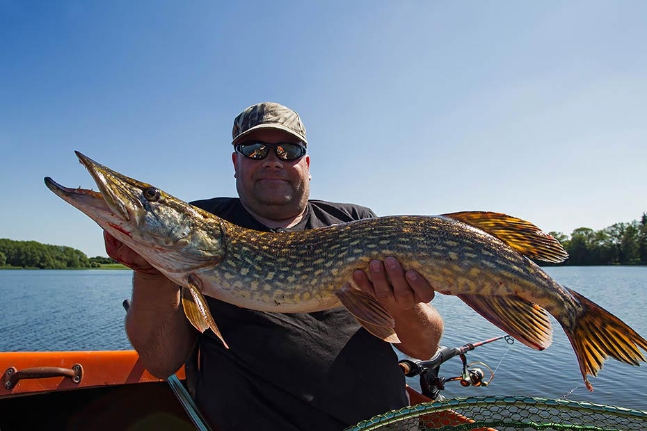 Volker mit kapitalem Hecht - (Laenge: 93cm), Esox lucius - (Borgdorfer See), Volker with Northern Pike - (Lenghts: 93inch)