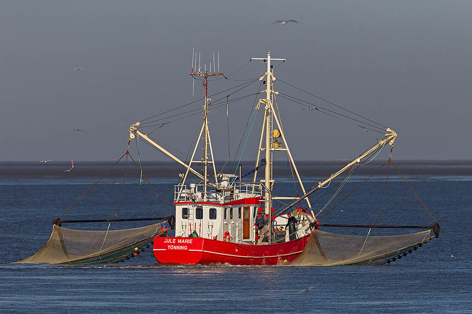 Krabbenkutter vor der Deutschen Nordseekueste, Eidersperrwerk  -  Schleswig-Holstein, Shrimp boat on the North Sea at the German coast