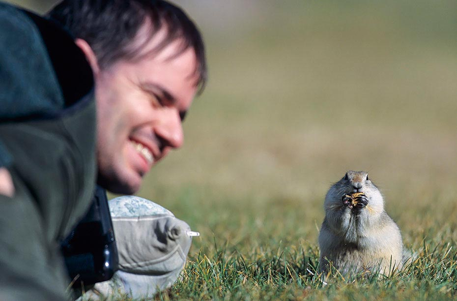 Frank belaestigt Richardson - Ziesel, Elk Island Nationalpark - Kanada, Frank molest Richardson Ground Squirrel