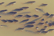 Thumbnail of the category Fishes