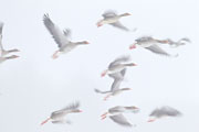 Thumbnail of the category Bird photography-News