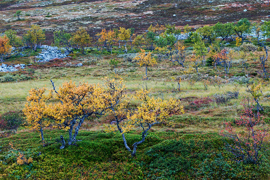 Herbst auf dem Idre Fjaell, Dalarnas Laen - Idre Fjaell, Indian summer on the Idre Fjaell