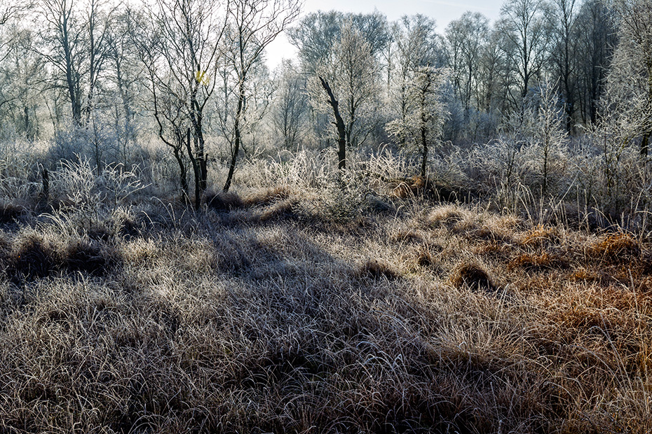 Morgenstimmung mit Raureif und Birken im Moor, Reitmoor  -  Haaler Au-Niederung, Morning mood with hoar frost and birches in a bog