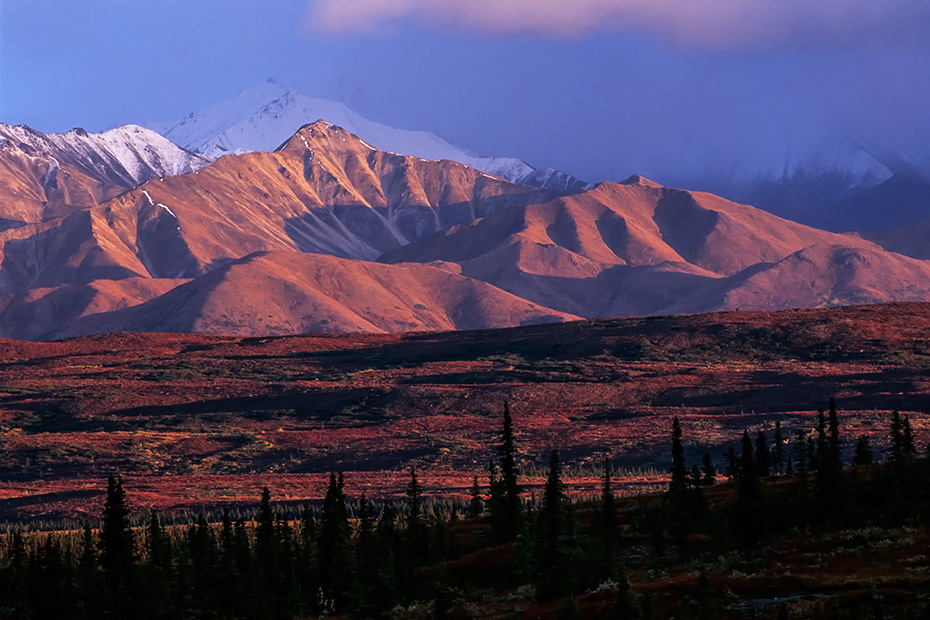 Alaskakette und herbstliche Tundra im Abendlicht, Denali Nationalpark  -  Alaska, Alaska range and tundra landscape in evening light