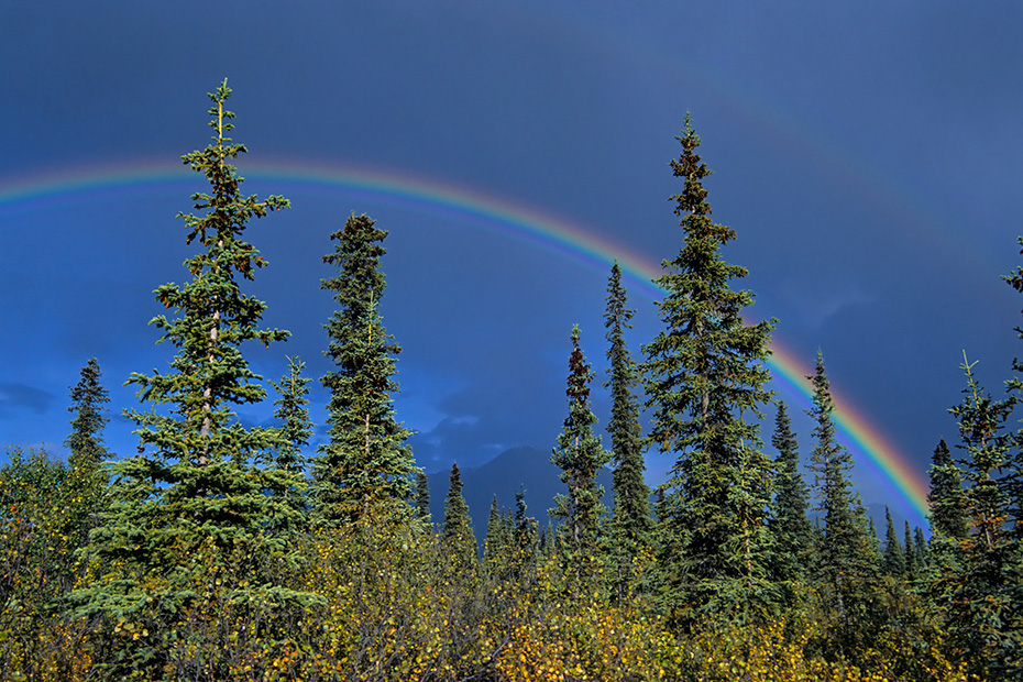 Regenboegen ueber der herbstlichen Tundra, Denali Nationalpark  -  Alaska, Rainbows over the tundra in indian summer