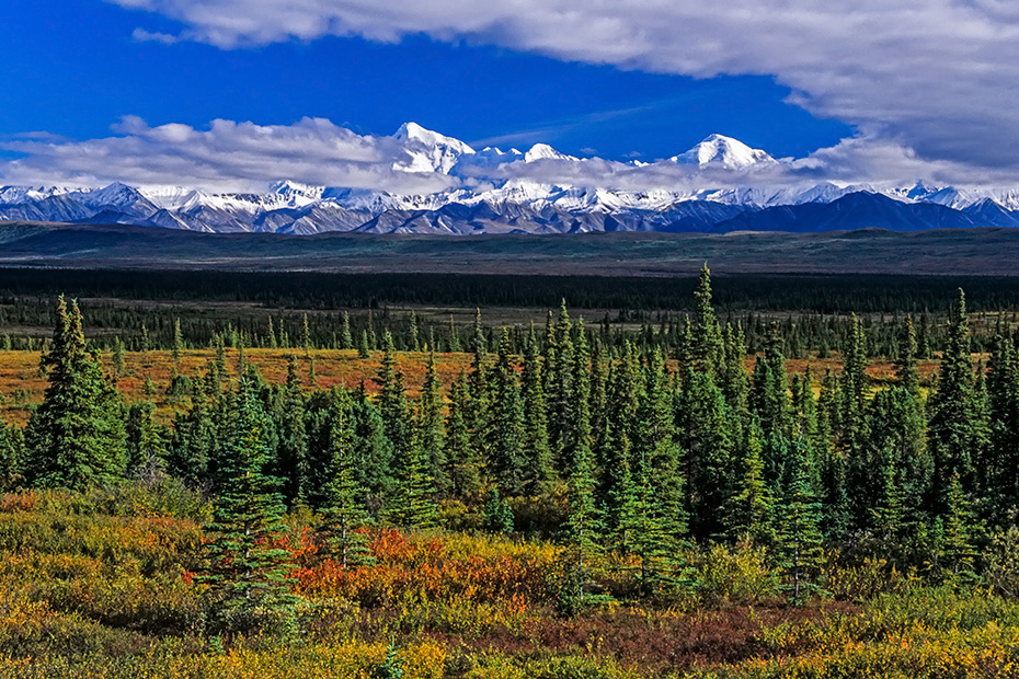 Alaska-Bergkette und herbstliche Tundra, Denali Nationalpark  -  Alaska, Alaska range and tundra landscape in indian summer