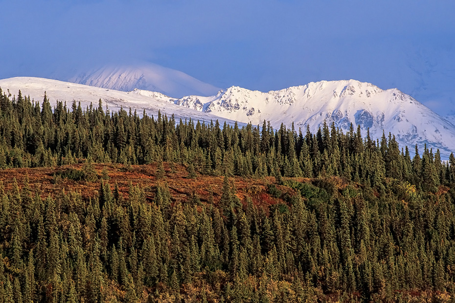 Neuschnee auf den Bergen der Alaskabergkette, Denali Nationalpark  -  Alaska, Fresh snow on the mountains of the Alaska range