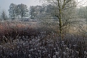 Morning mood with hoar frost, birches and Sweetgale in a bog