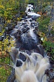 Wildbach im Herbst, Fulufjaellet-Nationalpark  -  Dalarna, Mountain torrent in fall