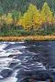 Wildwasser und Birken im Herbst, Fulufjaellet-Nationalpark  -  Dalarna, Whitewater and birches in fall